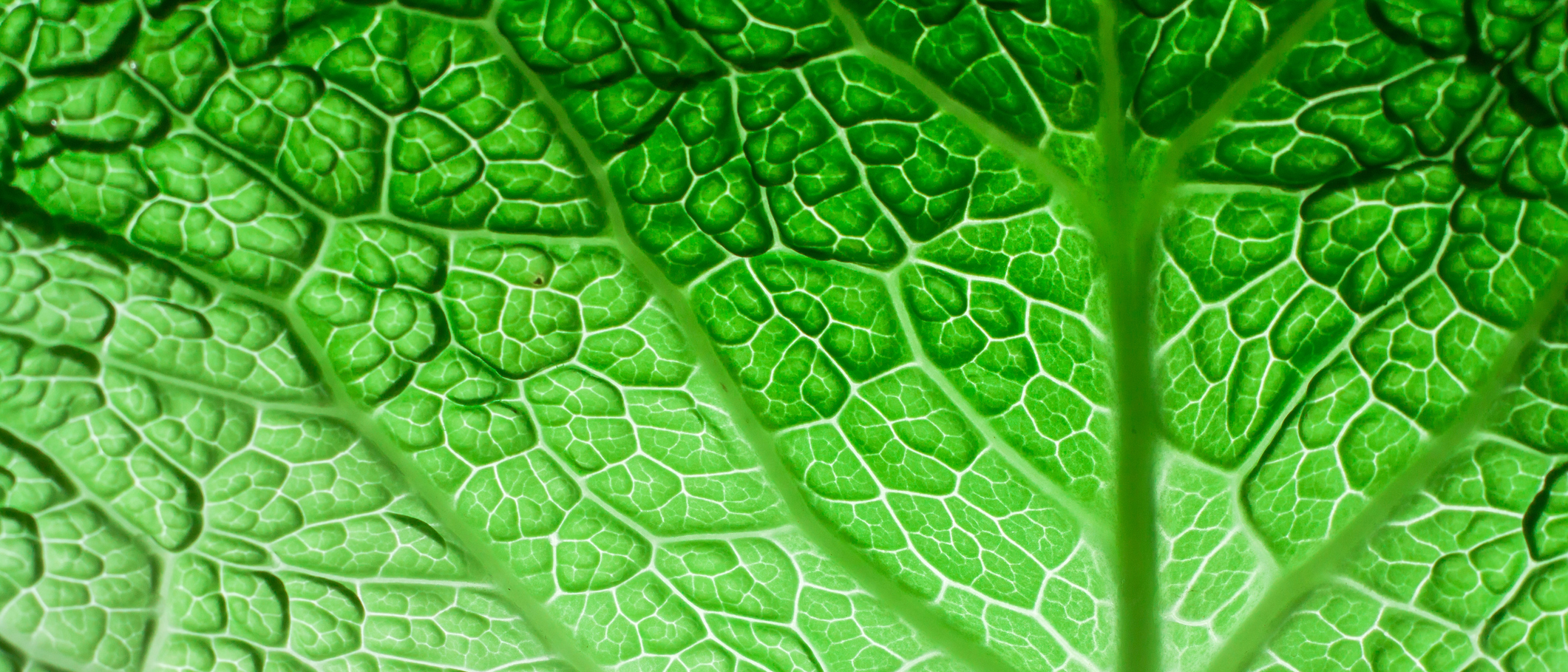 Green Leaf Portfolio